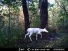 deer_dugway005